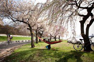 Primavera en Estados Unidos, Central Park.