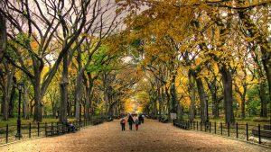 Central Park en otoño-